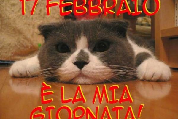 17 febbraio | È la giornata del gatto!