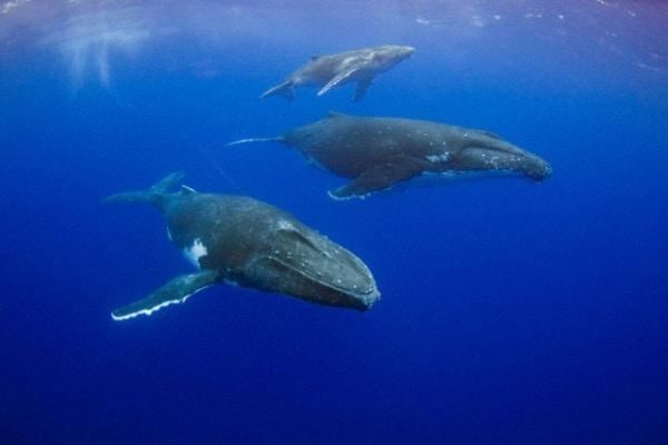 La lunga migrazione delle balene
