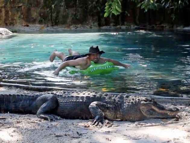 Pazzie   A nuoto con gli alligatori