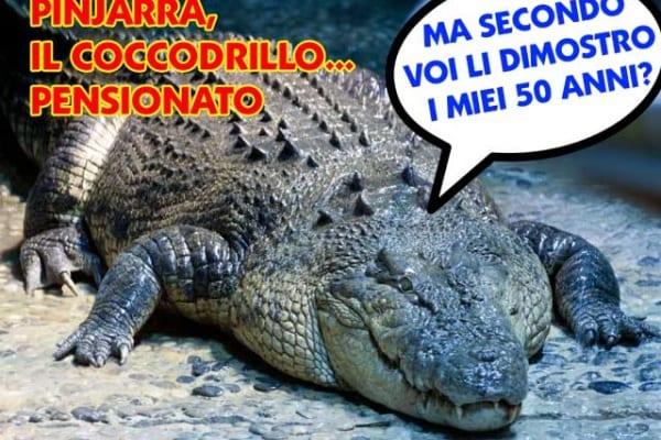 Pinjarra, il coccodrillo di Melbourne, è andato in pensione!