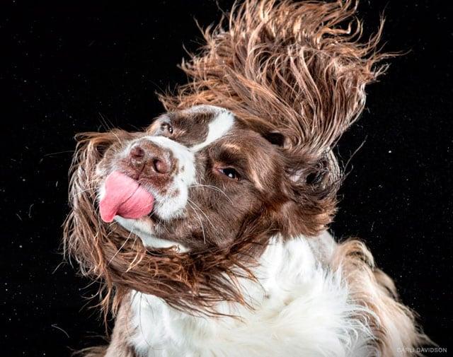 Foto buffe di cani che si scuotono