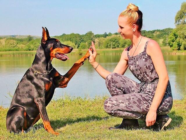 I cani riconoscono le nostre emozioni. Lo conferma uno studio