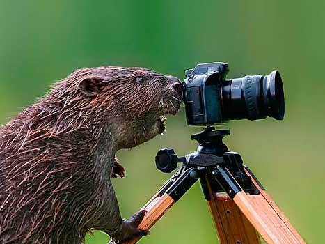 Una nuova professione: l'animalografo, l'animale-fotografo