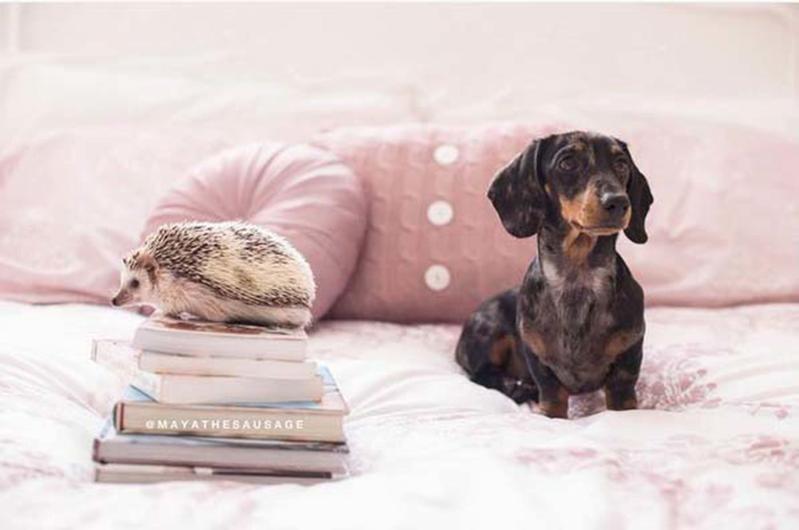 Cane e riccio, l'amicizia oltre gli aculei! (FOTO)