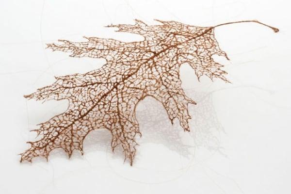 """Incredibile: queste foglie sono """"finte"""", ma fatte con capelli """"veri""""!"""