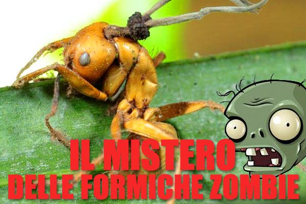 Il mistero delle formiche zombie e del fungo killer
