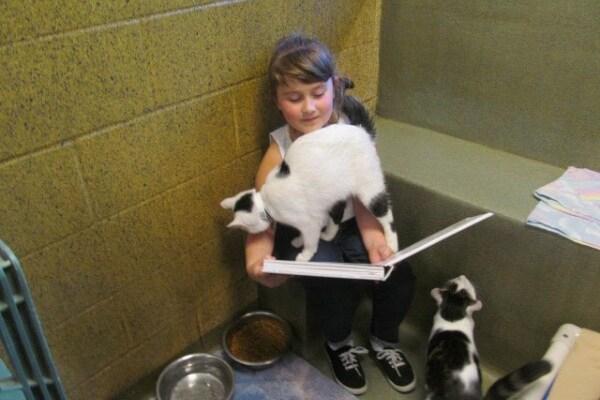 Book buddies program | Bambini che leggono le fiabe ai gatti