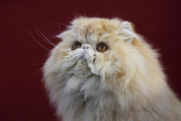 Test   Quale gatto sei? Scoprilo con Junior!
