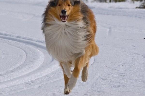 W i cani