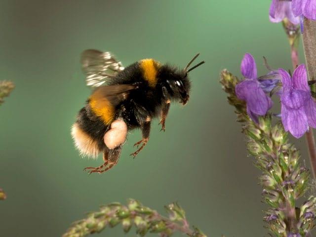 Scopri il meraviglioso mondo degli insetti!