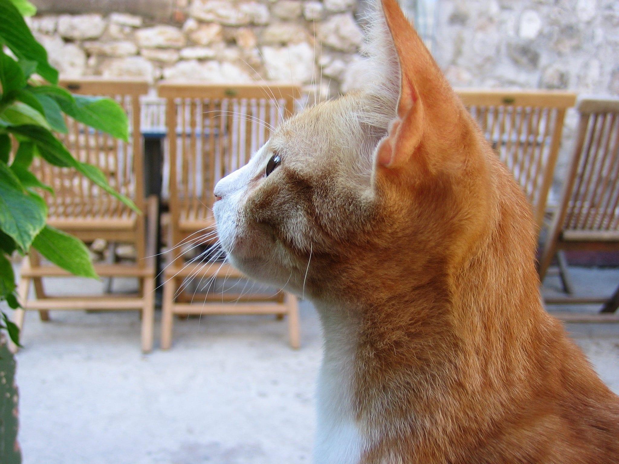 Che cosa ci fa un gatto davanti a…