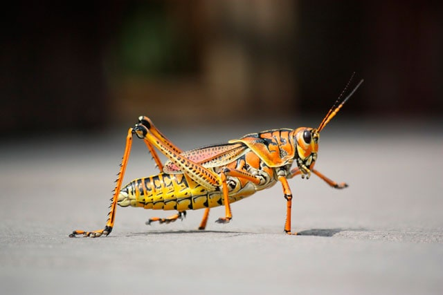insetti estivi