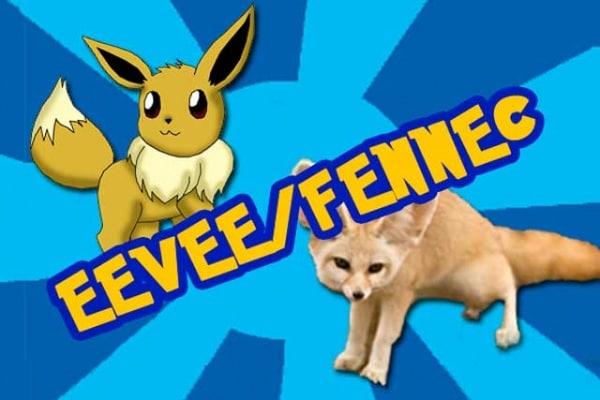 I Pokémon sono animali veri? Scopri il fennec, il vero Eevee!
