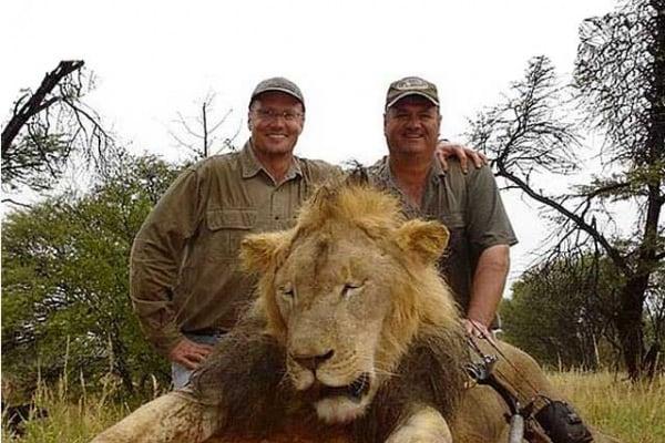 La storia di Cecil, leone dello Zimbabwe