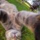Selfie... da gatto! Gli autoscatti del micio Manny / Image 6