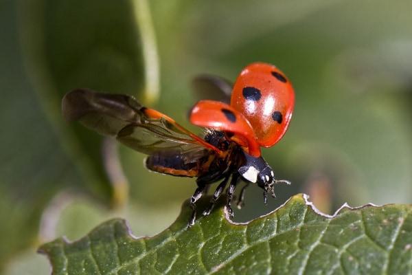 Dieci cose che non sai sugli insetti