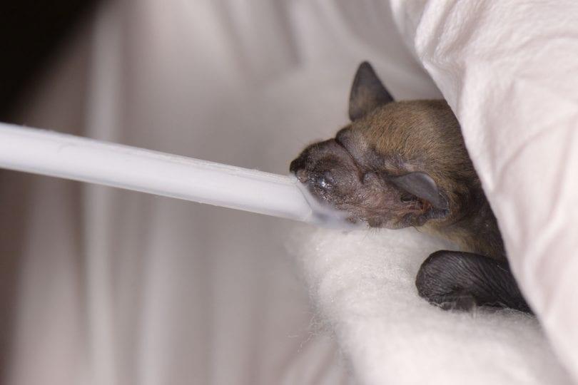 Alla scoperta dei pipistrelli