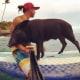Pig Star, i maialini più famosi di Instagram! / Image 7