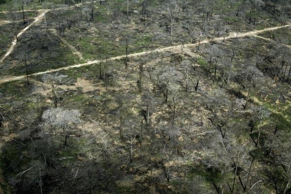 S.O.S Pianeta: scomparso un decimo della natura selvaggia!
