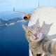 Selfie... da gatto! Gli autoscatti del micio Manny / Image 4