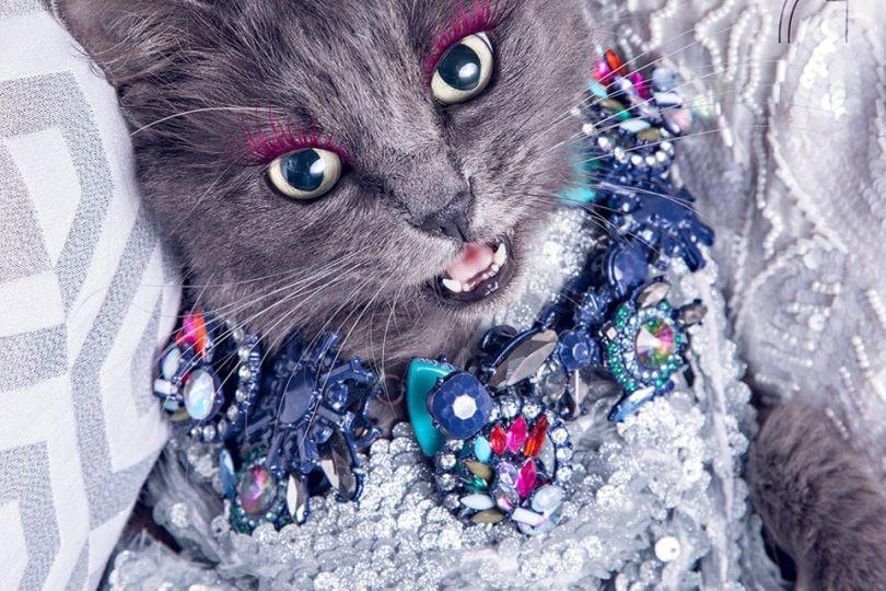 Pitzush, il gatto più fashion del mondo che prende in giro la moda (FOTO)