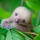 Il Koala, il simpatico dormiglione australiano! / Image 0
