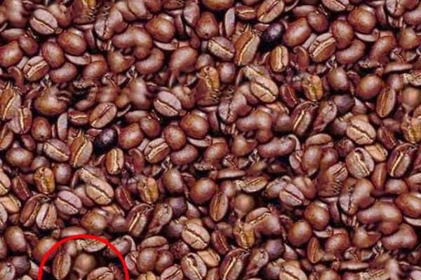 L'uomo tra i chicchi di caffé | La soluzione
