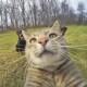 Selfie... da gatto! Gli autoscatti del micio Manny / Image 5