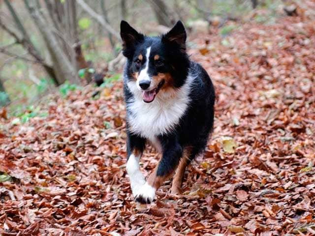 Fotogallery | Cani e foglie, una lotta infinita