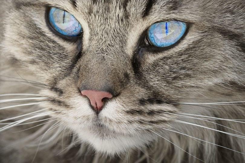 20 felini selvatici e domestici diffusi in Italia