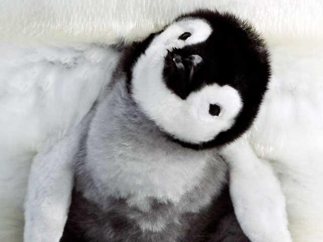 Al cinema | La marcia dei pinguini – Il richiamo