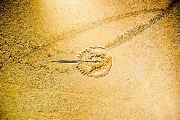 Non solo dinosauri: i fossili delle creature più strane ci svelano l'evoluzione della vita!
