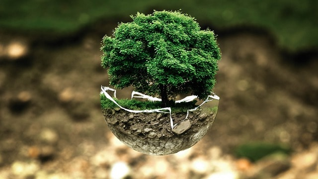 Quanto è ecologico il mondo che ti circonda?