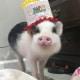 Pig Star, i maialini più famosi di Instagram! / Image 4