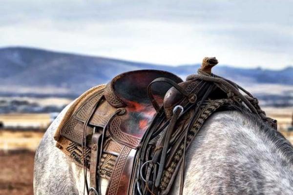 Lo sapevi che | Chi ha inventato la sella dei cavalli?