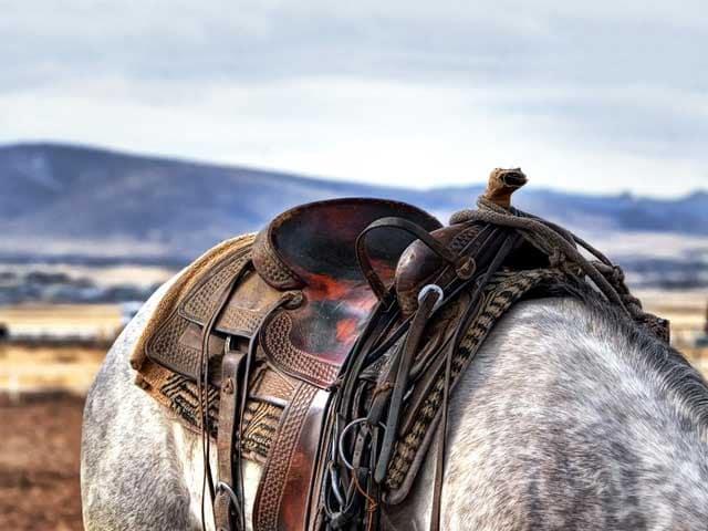 Lo sapevi che chi ha inventato la sella dei cavalli focus junior