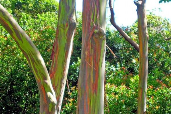 Junior Reporter: Un albero di 1000 colori