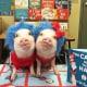 Pig Star, i maialini più famosi di Instagram! / Image 3