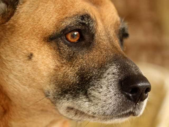 Junior reporter: 20 curiosità sui cani