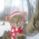 Selfie... da gatto! Gli autoscatti del micio Manny / Image 1