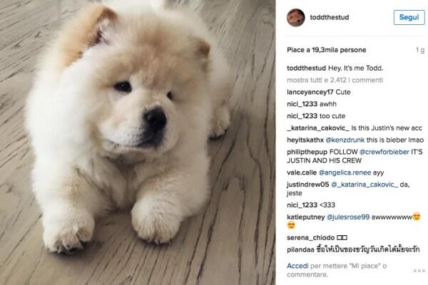 Justin Bieber cancella il suo account Instagram e ne crea uno per il suo cane Todd