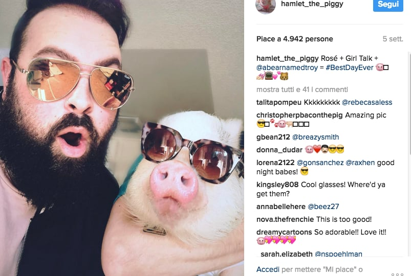 Pig Star, i maialini più famosi di Instagram!