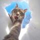 Selfie... da gatto! Gli autoscatti del micio Manny / Image 0