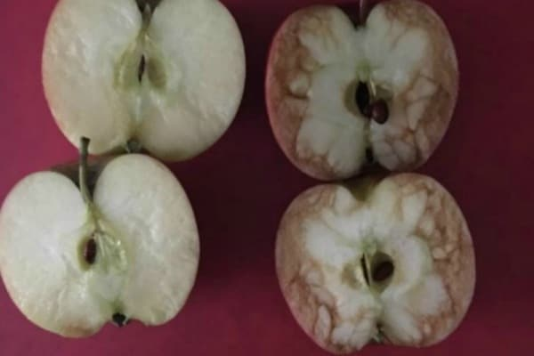 Il bullismo? Si spiega con due mele! La lezione di una maestra inglese