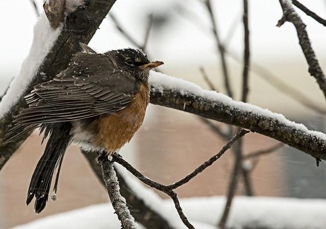 I consigli della Lipu per aiutare gli uccellini durante il gelido inverno