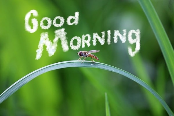 Si scrive buongiorno o buon giorno?