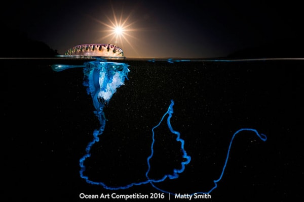 Ocean art underwater photo contest: ecco le foto più belle