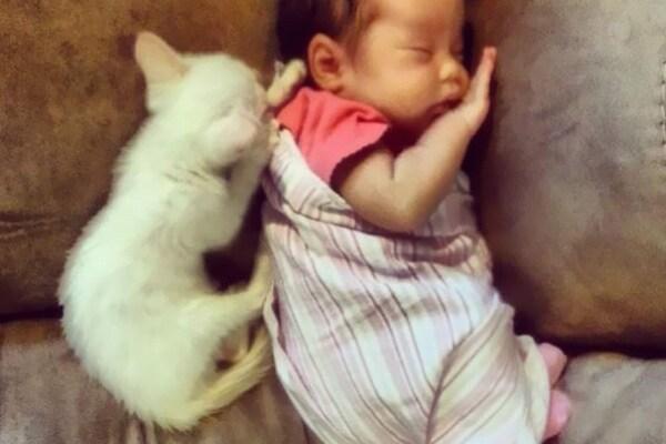 Una neonata fotografata insieme al suo gattino è divenuta famosissima grazie a internet