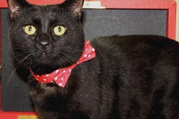 """Il gatto """"acchiappatopi"""" del Tesoro inglese è una star su Instagram"""