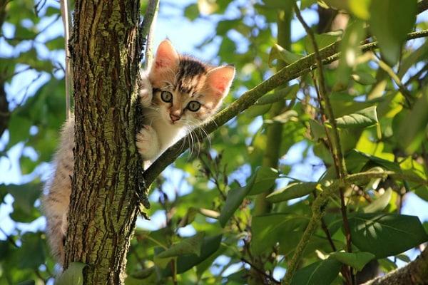 Junior reporter: gatti agili anche senza una zampa